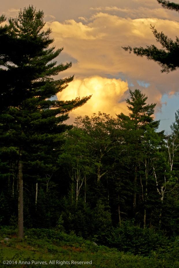 Gold_Cloud_Dark_Forest-6696
