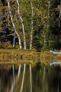 White Birches, Canoe