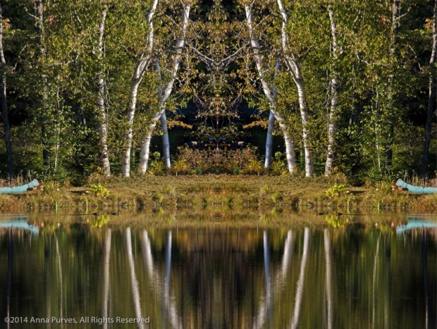 Mirror Image Diptych: Canoes and Birch Trees